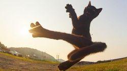 Ce chat qui met un high kick vaut le