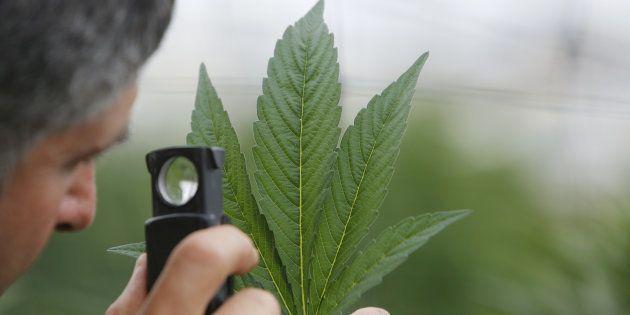 Dépénaliser ou légaliser le cannabis: le match des avantages et des