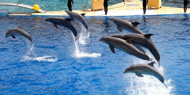 Le Conseil d'État annule l'arrêté interdisant la reproduction des dauphins en captivité