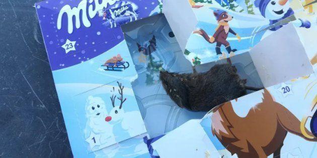 Une enfant retrouve une souris morte dans son calendrier de