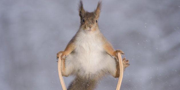 Ces écureuils sont plus que parés pour les Jeux olympiques d'hiver