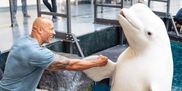 Dwayne Johnson scandalise ses fans après la publication de photos de sa visite dans un aquarium