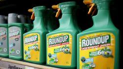 La condamnation de Monsanto aux États-Unis, une bataille judiciaire parmi tant d'autres dans le monde autour du