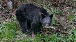 Un père et son fils abattent une famille d'ours en Alaska, la scène filmée par une équipe de
