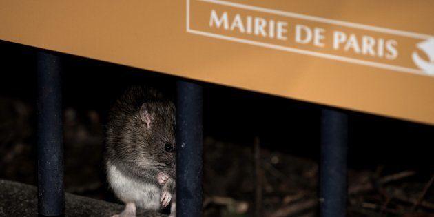 Anne Hidalgo réagit à la vidéo virale sur les rats dans une poubelle