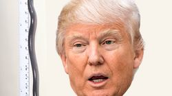 Donald Trump donne son nom à un amphibien