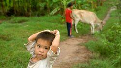 Dans les pays en développement, les enfants vivant près d'une forêt auraient une alimentation plus