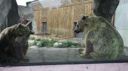 L'ourse du film de Jean-Jacques Annaud va être transférée dans un parc plus