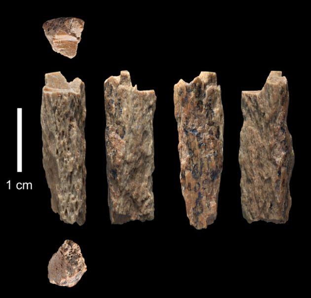 En Sibérie, découverte d'une jeune fille métisse âgée de 90.000 ans, issue de deux espèces