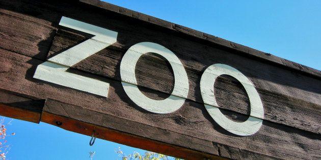 Après en avoir longtemps été fan, voici pourquoi je n'irai plus jamais au zoo.