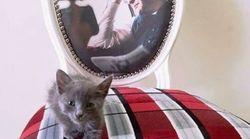 Mélenchon présente le chat recueilli par son équipe à