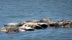 300 tortues ont été retrouvées mortes au large du