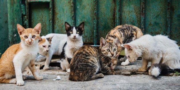 Photo prétexte. Un groupe de chats à La