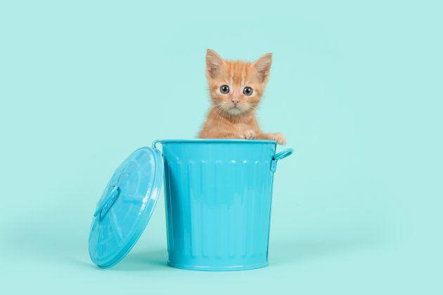 Cette ville de Nouvelle-Zélande veut bannir tous les chats