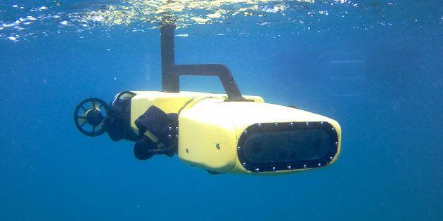 Rangerbot en action, sous l'eau, dans la région de la grande barrière de corail, au nord-est de l'Australie.