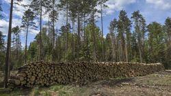 La Pologne accusée d'avoir détérioré l'une des dernières forêts primaires