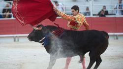 Un jeune torero français encorné à la cuisse lors d'une corrida à