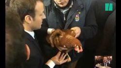 Macron a adopté une poule au Salon de l'Agriculture et BFMTV l'a invitée en plateau (la