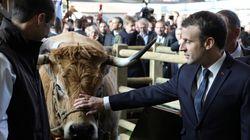 Au salon de l'Agriculture, Macron prend le taureau par les cornes (au risque d'en sortir