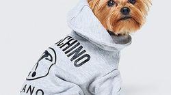 Vous allez pouvoir acheter des vêtements pour chiens Moschino chez