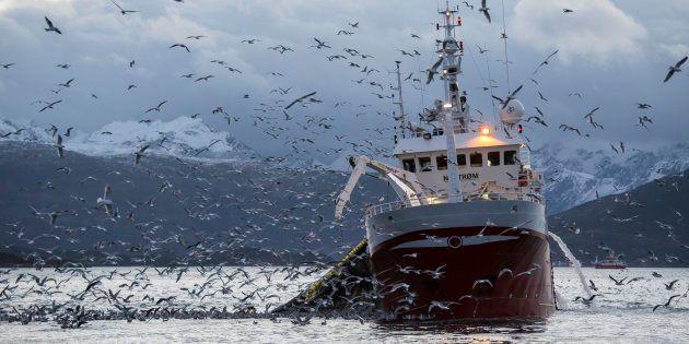 Ce que dit la science sur la pêche