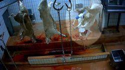 Animaux mal étourdis et agneau écartelé vivant: ouverture du procès de l'abattoir de