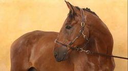 Douze chevaux sauvés de l'abattoir grâce à la mobilisation des réseaux