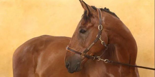 Douze chevaux sauvés de l'abattoir grâce à une mobilisation sur les réseaux