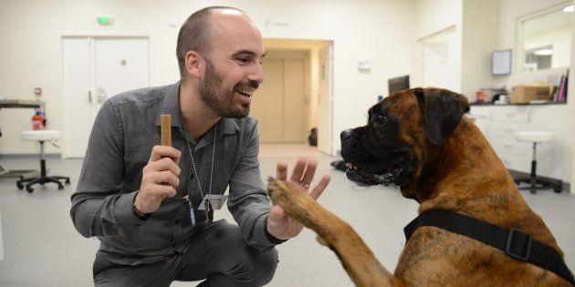Diagnostiquer et traiter le cancer. Tel a été mon objectif dès le début de mes études en médecine vétérinaire, où j'ai très tôt souhaité me spécialiser en oncologie, la médecine des cancers, ce domaine si exceptionnel.