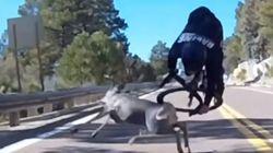 Ce cycliste s'est pris un cerf de plein