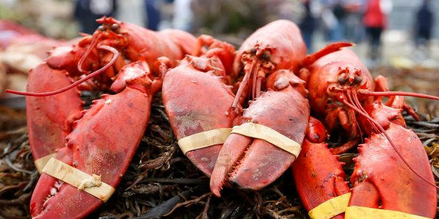 Un restaurant fait respirer du cannabis aux homards pour les détendre avant la