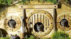 Ce fan de Tolkien a construit un village de hobbits pour