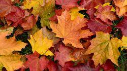 Pourquoi les feuilles d'automne sont rouges, orange ou