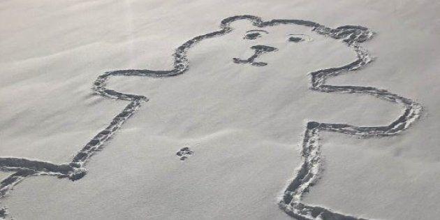 Le dessin de cet ours a été tracé dans la nuit du mardi 29 au mercredi 30 janvier à