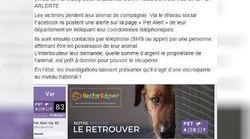 La gendarmerie met en garde contre une escroquerie visant ceux qui ont perdu leur animal de