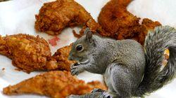 Des restaurants britanniques ont mis de l'écureuil gris à leur