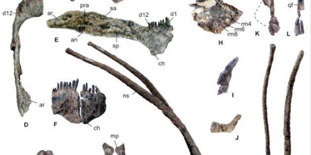 Image tirée de l'étude sur le Bajadasaurus