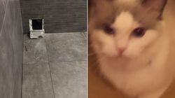 Ce chat a fini emmuré dans une baignoire à cause d'un