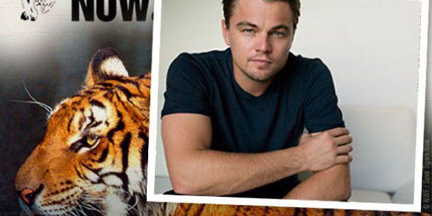 La star Leonardo DiCaprio, engagé dans la préservation de la planète et la cause animale, avait injecté...