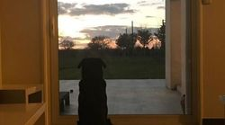 La sœur d'Emiliano Sala partage une photo bouleversante de son chien qui