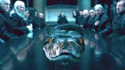 Le serpent de Voldemort était une femme (et on