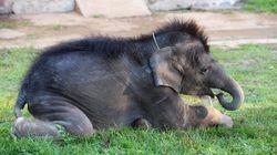 Les poils d'éléphants sont transformés en bijoux porte-bonheur au