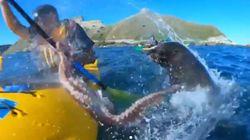 Ce kayakiste s'est littéralement pris un coup de poulpe par une