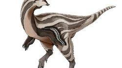 Un nouveau raptor ressemblant à un Pokémon découvert en