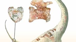 La découverte de ce dinosaure à queue en forme de cœur tombe à pic pour la