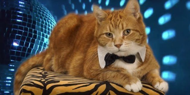 Keyboard Cat Bento Le Chat Star De Linternet Est Mort Le