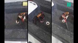 Cette vidéo virale d'un crabe qui se bat avec un couteau montre en réalité tout autre