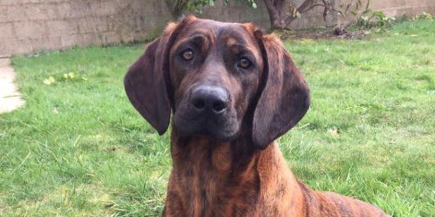 Onnie, la chienne des sapeurs-pompiers du Morbihan avait été volée dimanche 17