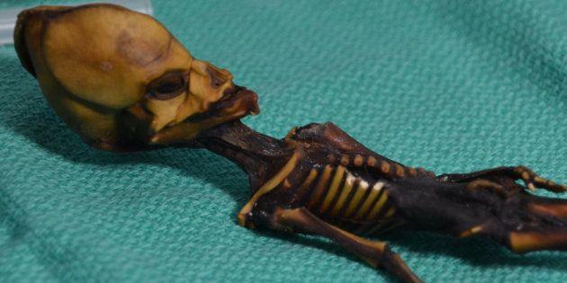 Non, ce mystérieux squelette découvert dans le désert de l'Atacama en 2003 n'était pas un