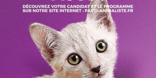 Les chatons, stars d'Internet et des affiches du parti animaliste aux législatives